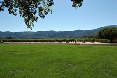 California, Napa County- Oakville, Robert Mondavi Vineyard (EC Leatherberry) Tags: grape napavalley california napacounty winery oakvillecalifornia wine robertmondaviwinery vineyard robertgeraldmondavi viticulture