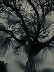 The tree (Splatito8127) Tags: conceptual night dark losangeles winter drops water dancing poetry moody rain abstract blackandwhite tree