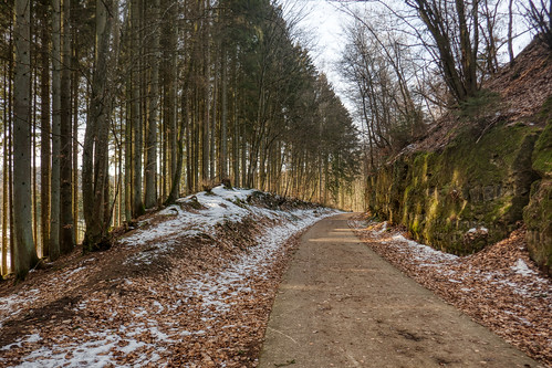Forest near Eischen