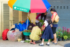 You choose (Beegee49) Tags: street people filipina selling flowers planet happy luminar sony a6000 bacolod city philippines asia