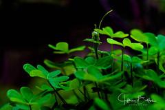 Green Sprout (Jeffrey Balfus (thx for 4 Million views)) Tags: sonyalpha spring green leaves sonya9mirrorless sonyilce9 fullframe 90mmf28macrogossprimelensmacrosel90m28g