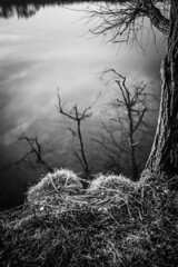 The reflection of my fears (Un instant.) Tags: trees lake water bnw canon 1855mm nature walking look eau