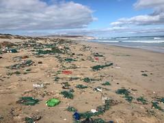 Boa Esperança3 (ilheuraso) Tags: boaesperança boavista bioscv turtle tartarugas sea caboverde caretta lixo plastic detrits