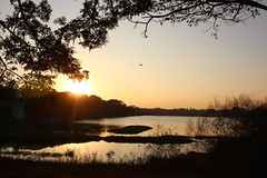 Kukkarahalli Lake (NovemberAlex) Tags: mysore colour india nature sunset karnataka silhouette water