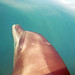 Porpoise or Dolphin ?