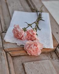 Claveles... (Irene Carbonell) Tags: claveles flowers flores floralperfection nature naturaleza rosado pasteles