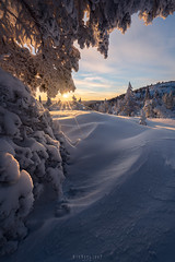 Subzero (Ron Jansen - EyeSeeLight Photography) Tags: buskeud norway winter snow tree trees mountain hike snowshoe lines texture crisp ice branches sunstar sun sunrise morning