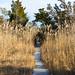 Path of the Salt Trimmed Cedars