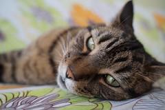 DSC01021 (iocatco) Tags: cat kitten cats sony a7
