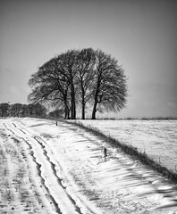 white and black and white #1 (Redheadwondering) Tags: sonyα7ii snow salisburyplain wiltshire winter landscape tracks trees minolta minolta100200mm lines blackwhite bw