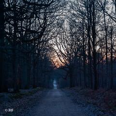 The line (MF[FR]) Tags: forest forêt bois wood path chemin route road line straight arbres trees sunsest ciel sky samsung nx nx1 france europe îledefrance essonne sénart
