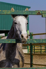 Horse (Rouge Visual) Tags: horse caballo spring primavera animal countryside campo retrato portrait color imagen picture fotografía photography