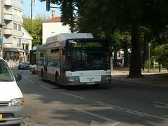 STCP 3174 (Elad283) Tags: porto oporto portugal bus boavista stcp man nl313 nl313f cng caetano caetanobus citygold 1387uh 3174