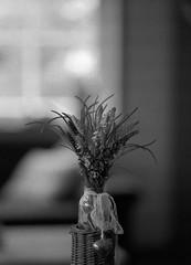 Muscari armeniacum (Rosenthal Photography) Tags: treu ff120 familie städte ilforddelta3200 anderlingen dekoration asa3200 blume bw 45x6 20170503 analog mamiya645pro dörfer siedlungen muscariarmeniacum muscari armeniacum indoor flower mamiya mamiya645 645pro 150mm f28 ilford delta delta3200 epson v800