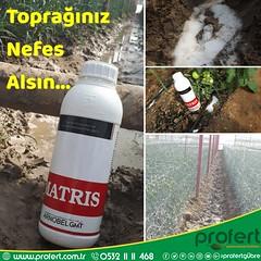 profert-matris (Profert Gübre) Tags: damlama yandal sulama süsbitkisi sebze seracılık sebzecilik sera seed soil sağlık stres sel summer sevgililergünü