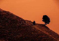 2017 The Black Hills 14 (DrLensCap) Tags: the black hills custer state park rapid city south dakota sd 40 day adventure robert kramer natureinfocusgroup