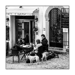 "Deux chiens au ""Café 4 chats""/ Dos perros en el ""Café 4 Gatos"" (francis_bellin) Tags: mars blackanwhite chats andalousie streetphoto street café netb photoderue froid grenade noiretblanc monochrome quartieralbaicin espagne rue olympus bw 2019 regard chiens"