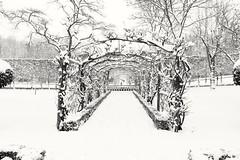 Winter garden (phileveratt) Tags: buscotpark fourseasonswalledgarden snow winter eos77d efs18135 blackwhite monochrome