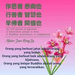Orang yang berbuat jahat adalah orang yang bodoh,⠀ Orang yang berbuat baik adalah orang yang bijaksana,⠀ Orang yang belajar Buddhis adalah orang yang tercerahkan. (Guan Yin Citta Buddhism) Tags: buddhist buddhism guanyin master lu xin ling fa men quote wisdom buddha kwan im guan yin jun hong