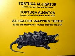 barcelona_3_732 (OurTravelPics.com) Tags: barcelona explanation alligator snapping turtle terrarium zoo