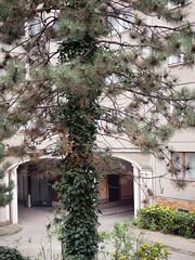 Der Baum. / 05.04.2019 (ben.kaden) Tags: berlin berlinmitte französischestrase architekturderddr städtebauderddr stadtnatur plattenbau ostmoderne neohistorismus manfredprasser 1983 1987 wbs70 2019 05042019 wohnquartier36