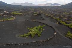 Lanzarote (piotr_szymanek) Tags: outdoor lanzarote vineyard lava soil mountains sky clouds 1k