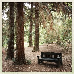 Silent in the trees (Maureen Bond) Tags: ca maureenbond bench restingplace trees garden quiet solitude inthetrees thisbenchcost25000 memorialbench descansogardens weeklyvisit fortunate local mobile walk refreshed peaceful beautiful