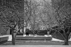 Toronto 2018_218 (c a r a p i e s) Tags: carapies cityscapes 2018 nikondf canada ontario toronto torontodominioncenter architecture arquitectura bw blackwhite blancoynegro fotografiaurbana urbanphotography urban urbanidad urbvanidad urbvanity urbanphoto streetphoto streetlife streetphotography