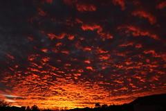 Sunset 11 29 18 #78 (Az Skies Photography) Tags: sun set sunset dusk twilight nightfall sky skyline skyscape rio rico arizona az riorico rioricoaz arizonasky arizonaskyscape arizonaskyline arizonasunset cloud clouds red orange salmon yellow gold golden black skyfire canon eos 80d canoneos80d eos80d canon80d november 29 2018 november292018 112918 11292018