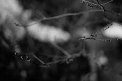 L1100907 (Zengame) Tags: kameidotenjin leica leicasl leicasltyp601 sl summilux summiluxsl50mmf14asph japan kameido tokyo typ601 ズミルックス ズミルックスsl ライカ 亀戸 亀戸天神 日本 東京 東京都 jp