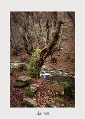 _ATP4723 (anahí tomillo) Tags: nikond7500 sigma1750f28 lightroom paisaje landscape naturaleza nature otoño autunm árbol tree bosque woods
