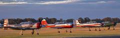Nice Evening (errolgc) Tags: australia aviation darkgreen displayteam flightline nanchangcj6 nanchangcj6vhfcy nanchangcj6avhnng30 reddragonrightnose russianroolettes temoransw warbirdsdownunder2018 yak52vhvhvmoscowaeroclub yak52vhyyk93 yakovlevyak52