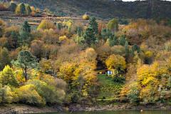 La casita (Lagier01) Tags: españa lugo ribeirasacra viajes landscape travel paisaje bosque otoño