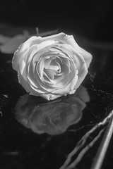 Rose (mellting) Tags: eskilstuna lägenheten nikond500 platser bloggad instagram matsellting mellting nikkor5018 nikon sverige sweden rose rosa ros flower plant monochrome bnw blackandwhite