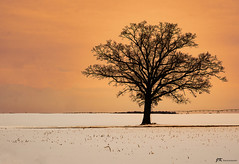Winters Color (James Korringa) Tags: winter color scenic landscape tree field snow