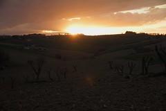 in silenzio...... - Pianello di Ostra (walterino1962 / sempre nomadi) Tags: sole colline pendii campicoltivatiearati case vegetazione alberi arbusti erba nubi nuvole luci ombre riflessi pianellodiostra ancona
