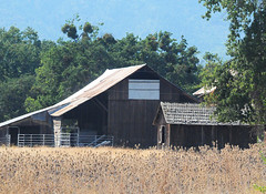 Barn Shed and Teasel (digifotovet) Tags: america architecture barn continents farmstructures medford north oregon states unitedstates