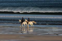riders on the coast (florenarocena) Tags: riders cavaliers jinetes mar mare mer itxaso sea see beach plate playa spiaggia strand ondartza