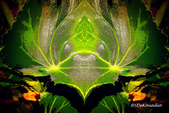 Plant (macro) (Stephenie DeKouadio) Tags: art artistic hypnotique hypnotic abstract abstractart abstractflower abstractflowers flowersabstract flowerabstract macro macroabstract darkandlight colorful green