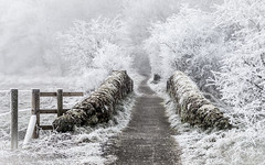 'Step over into a Winter Wonderland' (cazalegg) Tags: snow winter bridge frost fog scotland dumfries galloway path fence mist nikon d4s macro lens