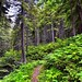 A Forest of Plants and Trees to Take in While Hiking in North Cascades National Park