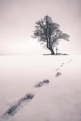 The path before you (Bilderschmied-Danz) Tags: baum tree kreuz cross schnee snow winter spuren trails fusspur footprint hügel hill mölleringshügel billerbeck scheisklonerei bilderschmied