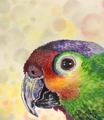 """Pretty Polly""edith-dooley.pixels.com  Prints and more are available. (Edie54) Tags: watercolor parrot pretty mimic ape echo macaw parakeet bird imitate copy imitator repeat copycat impersonate magpie mime quote recite lovebird emulate cuckoo train cracker crackers colorful beautiful hungry nestling polly animal fly cage tropical smart bright feathers beak beaks bobbing gaudy raucous captivating bokeh circles balloons pastel"