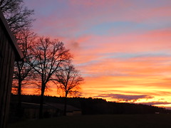 ...Abendrot.... (elisabeth.mcghee) Tags: abendrot abendhimmel abendsonne sunset sonnenuntergang himmel sky wolken clouds unterbibrach bäume trees wald forest oberpfalz upper palatinate