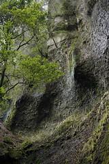 20190320a73_6301 (Gansan00) Tags: lce7m3 α7ⅲ sony japan 大分県 oita 日本 beepu 別府 landscape snaps ブラリ旅 03月 fe24105f4