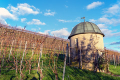 Vineyard on the Au Peninsula (Bephep2010) Tags: 2018 7markiii alpha au auzh halbinsel herbst himmel ilce7m3 sel24105g schweiz sony switzerland weinberg zurich zürich autumn blau blue fall peninsula sky vineyard ⍺7iii kantonzürich ch