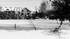 Streetball winter hibernation (superhic) Tags: basketball streetball winter snow street kosarka basket zima sneg