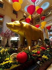 Year of the Pig (wirehead) Tags: em5mk2 918mm pig newyear venetian lasvegas