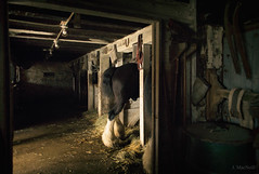 Landis Valley Barn (Jen MacNeill) Tags: horse farm animals stable barn light clydesdale draft horses equine