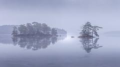 Misty morning (J. Pelz) Tags: landscape tree natgeo nature växjö sweden winterscene lake water naturephotography ice